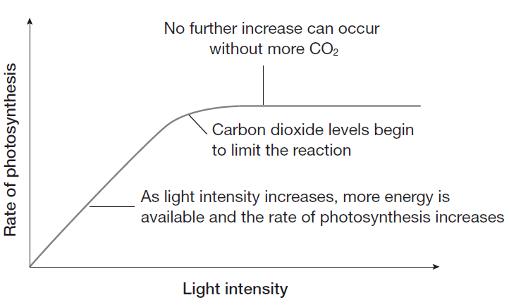Rate Of Photosynthesis Limiting Factor